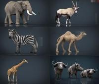 11个非洲野生动物3D模型 包含水牛、大象、犀牛、斑马、骆驼、鸵鸟、羚羊、长颈鹿等