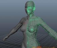 女体 cg模型