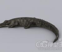 写实鳄鱼模型