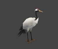 白鹤 3d模型