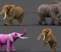 影视级大象带动画 多种动作-象牙-哺乳动物-动物园